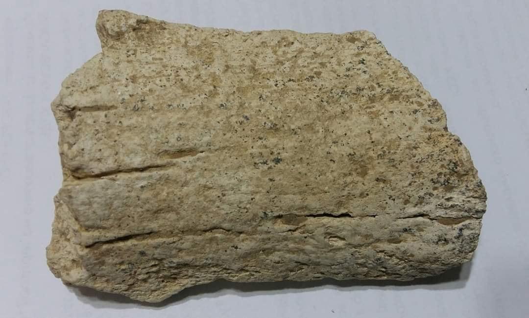 Останки были найдены на уровне трех метров от поверхности земли в глиняном обрыве / фото Иван Русев1